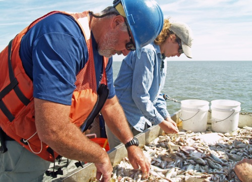 DNR's Pat Geer and Sea Grant's Jill Gambill sort through the marine life caught in a trawl.
