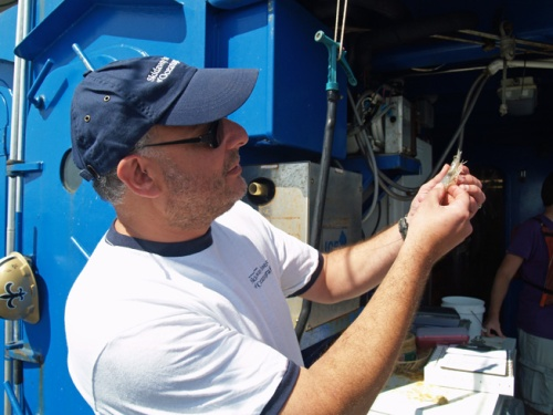 Skidaway Institute professor Marc Frischer examining a shrimp.