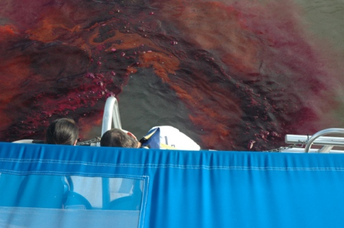 Dye being released from the stern of the research boat.