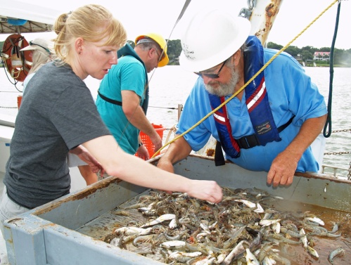"Ashley Price sorts the product of a trawl with John ""Crawfish"" Crawford on board the UGA Research Vessel Sea Dawg."