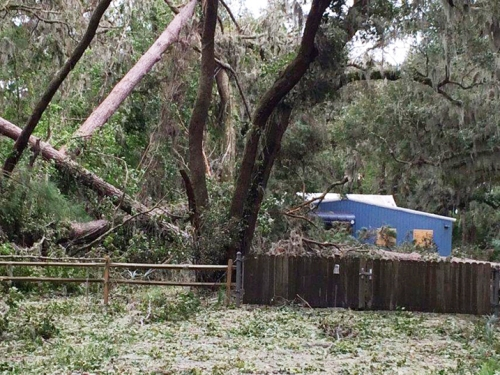 Downed trees and storm debris near Gray's Reef National Marine Sanctuary's building.
