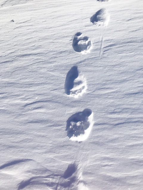Bear Tracks 480p