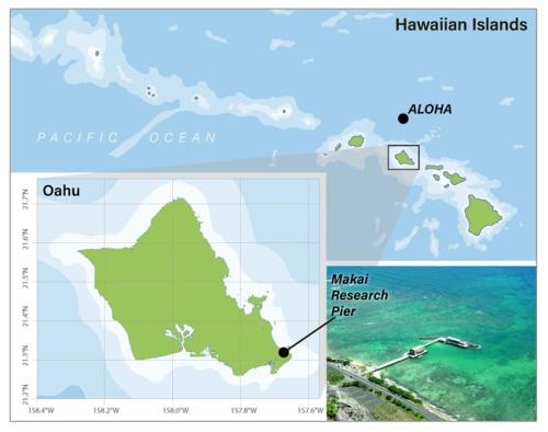 Skidaway Hawaii Project 2 650p